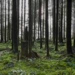 NEW RELEASE | WONDERLAND